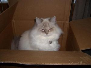 Diamond Sitting in a box owned by Darcey