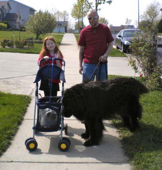 C&C walking Jewel and Mulsanne - submitted by Karen