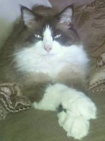 Bubba with crossed paws.