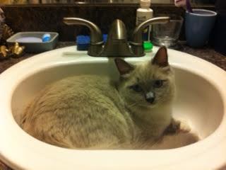 Yasha in his sink loved by Liz de Lisle