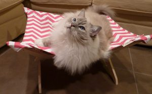 Peach Industries The Ultimate Cat Hammock Review3
