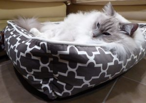 Bowsers Pet Bed Urban Lounger Product Review 2