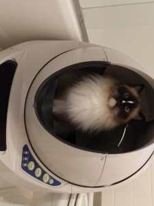 Review Litter Robot Open Air Floppycats 2