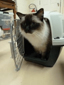 How to Move to a New Home with a Cat