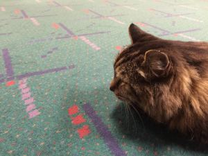 Corduroy - Guinness World Records Oldest Living Cat - Interview with Corduroys Mom Corduroy in the Portland International Airport