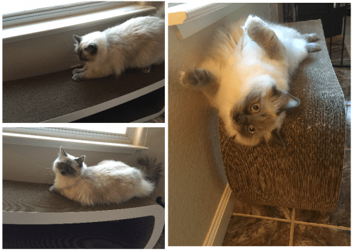 Cat Product Review PetFusion Jumbo Cat Scratcher Lounge
