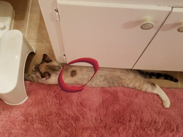 Cats And Ring Worm