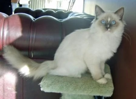 Gucci Blue Mitted with a Blaze at 6 months