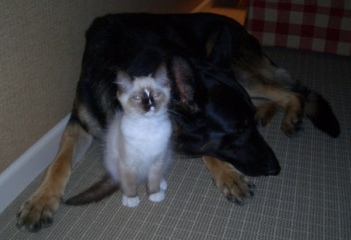 Murphy as Kitten with Tucker