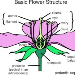 Flower Parts Diagram Cat6a Wiring Diagrams Infloresence Types Composite