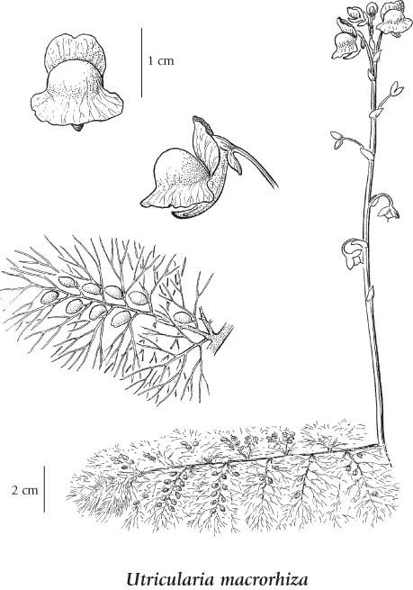 Shallow Pond Plants