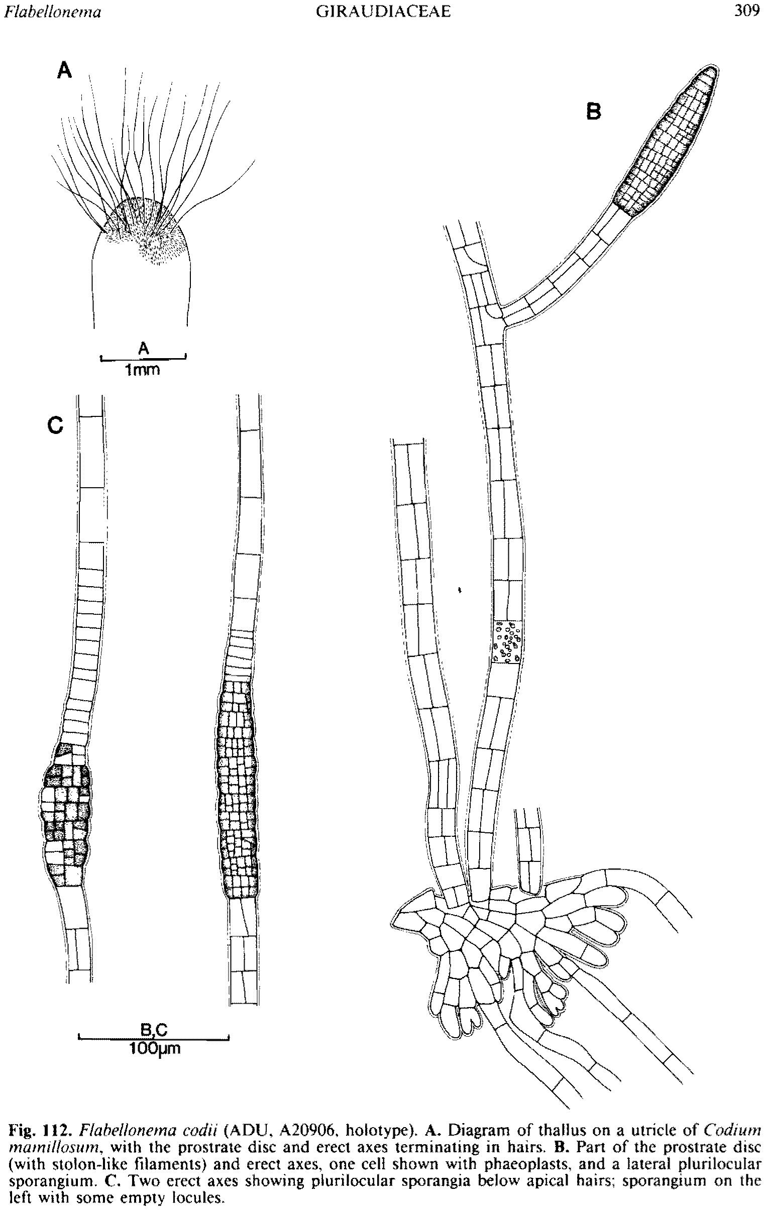 hight resolution of figure 112 enlarge