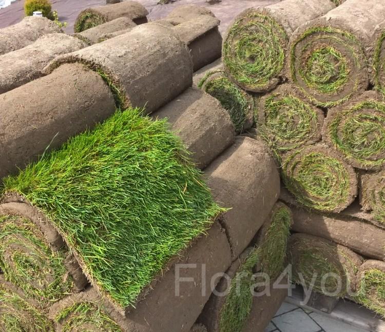 Trawnik w rolce na paletach