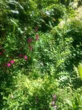 Blüten und Büsche.