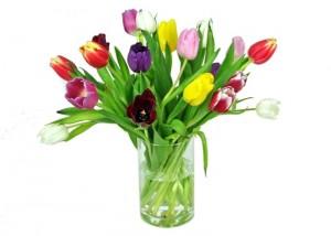 Tulpen online bestellen  bei FloraKingde  das Original
