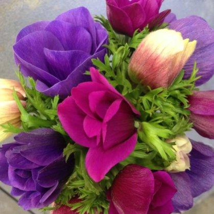 anemone-(2)