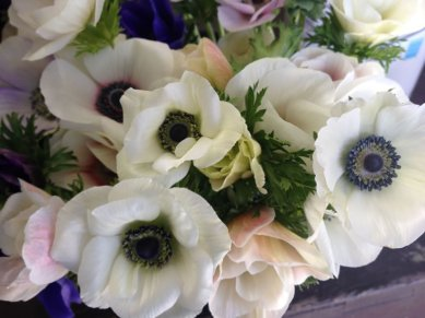 anemone-(3)