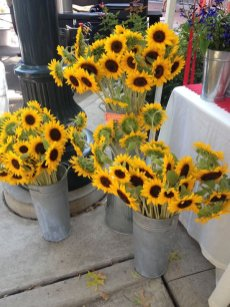 sunflowers-at-mkt