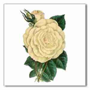 Vintage floral wall tile, cream white rose with green leaves on a white square background, Product Code A9