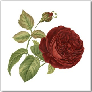 Deep Red Rose Ceramic Wall Tile