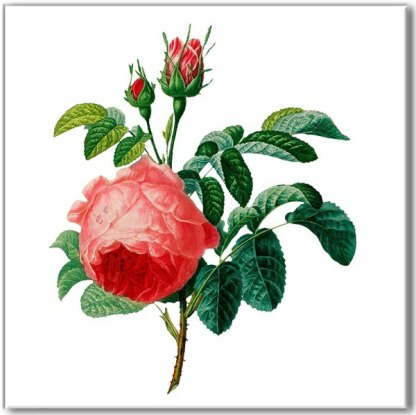 Vintage style wall tile, pink red rose with buds and green leaves, on a white square background