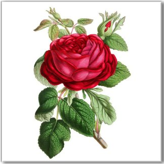 Shabby Chic red rose and rosebuds with green leaves on a white square background