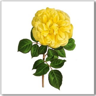 Ceramic floral wall tile, yellow rose with green leaves on a white square background