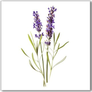 Floral design ceramic wall tile, purple lavender flowers on a white square background