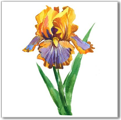 Floral wall tile, yellow and blue iris flower on a white square background