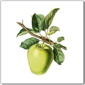 Fruit, Berries & Herbs Tiles