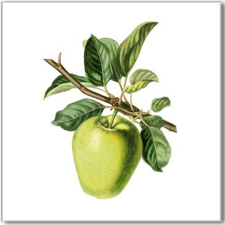 Ceramic wall tile with fruit design, green apple on a branch, with a white square background