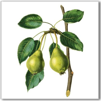 Vintage style wall tile, green pears on a branch, with a white square background