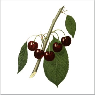 Cherries on a white square background ceramic wall tile