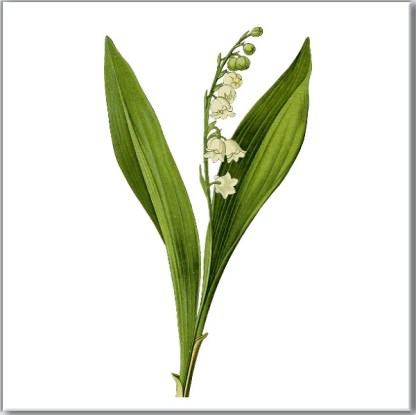 Lily of the Valley Floral Ceramic Wall Tile