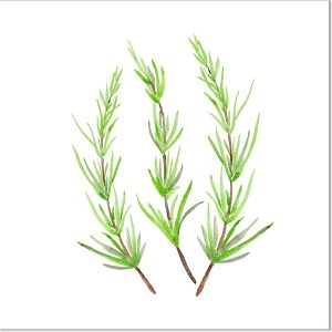 Rosemary Herb Ceramic Wall Tile