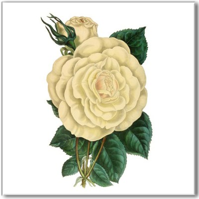 Shabby Chic Tiles - White Rose Ceramic Wall Tile