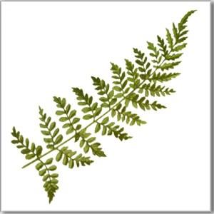 Green Tiles - Green Fern Leaf Ceramic Wall Tile