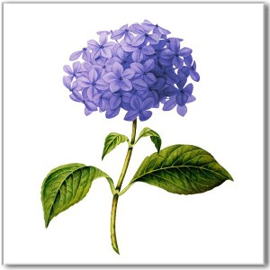Flower Tiles - blue hydrangea flower ceramic wall tile