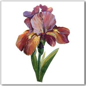 Flower Tiles - purple Iris flower ceramic wall tile