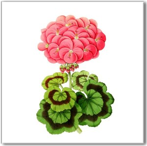 Flower Tiles - pink Geranium flower ceramic wall tile
