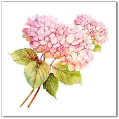 Kitchen tiles ideas - pink Hydrangea flower ceramic wall tile