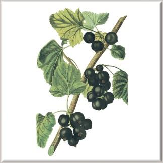 Blackcurrant Fruit Ceramic Wall Tile