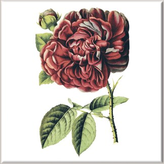 Dark Red Dahlia Flower Ceramic Wall Tile