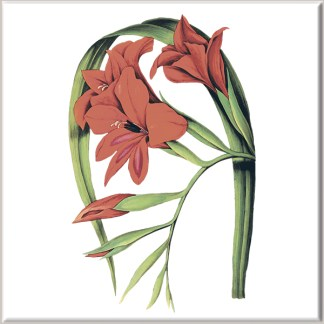 Dark Red Lily Flowers Ceramic Wall Tile