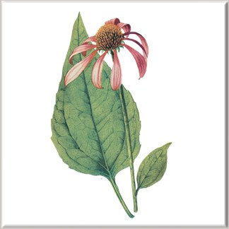 Echinacea Flower Ceramic Wall Tile
