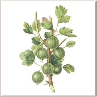 Green Gooseberry Fruit Ceramic Wall Tile