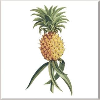 Pineapple Fruit Ceramic Wall Tile