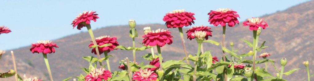 Contact Floral Treasure