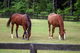 horses-at-winterview