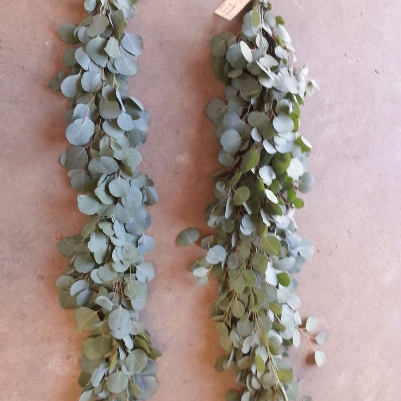 Silver Dollar Eucalyptus Garland PRICE PER FOOT Florasource